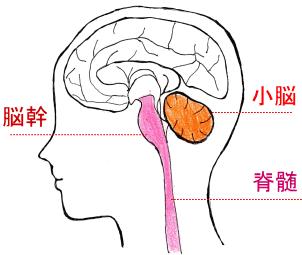 小脳 症 脊髄 変性